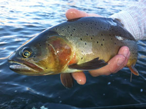 Brant Oswald - Montana fly fishing guide